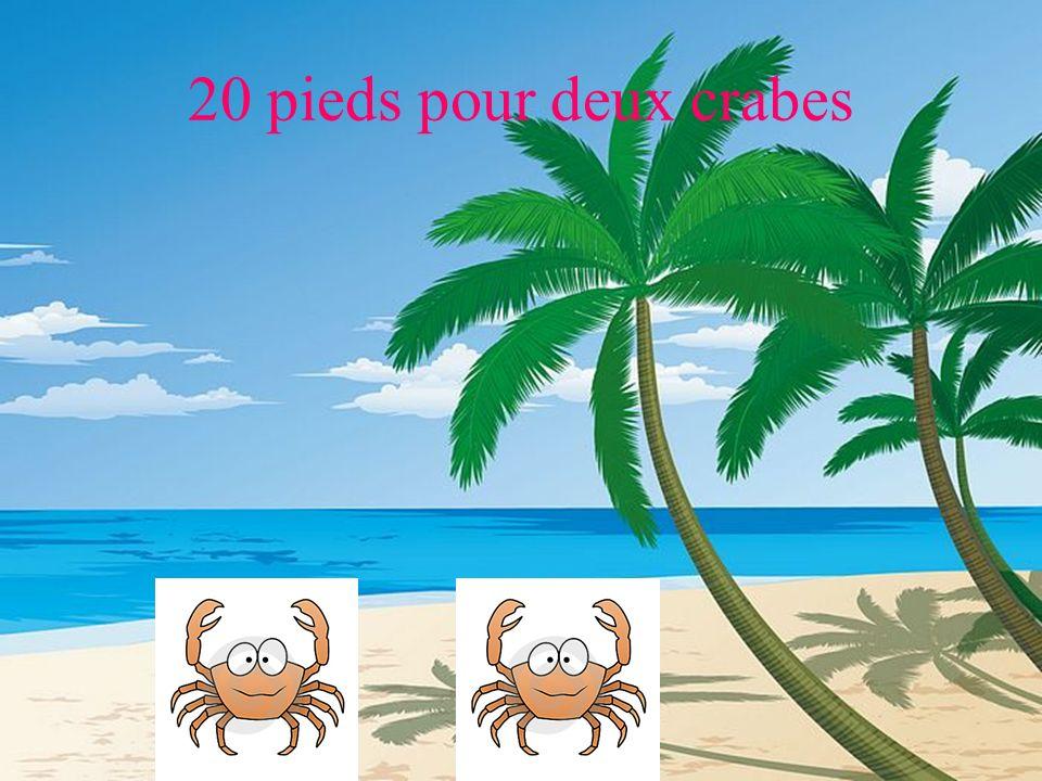20 pieds pour deux crabes