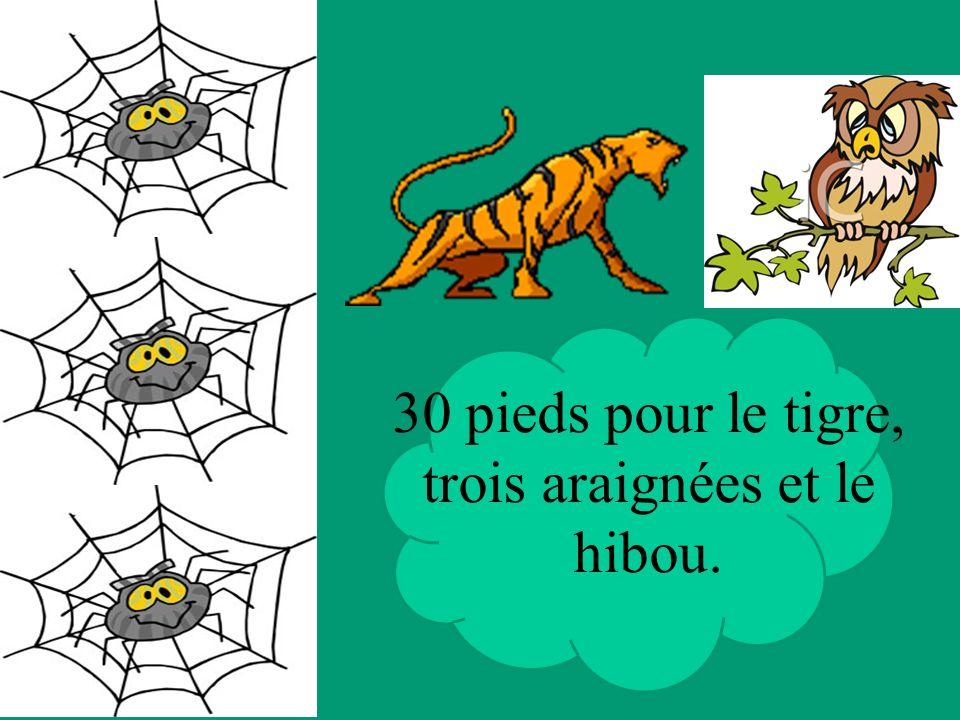 30 pieds pour le tigre, trois araignées et le hibou.