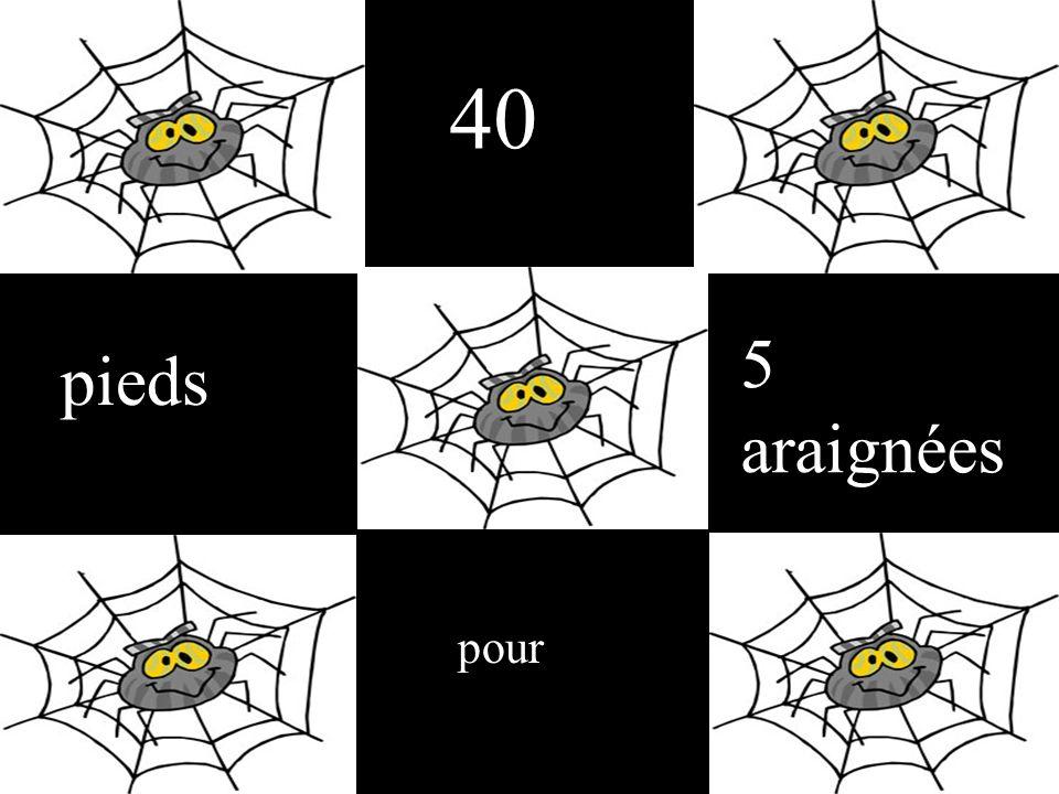 40 pieds pour 5 araignées
