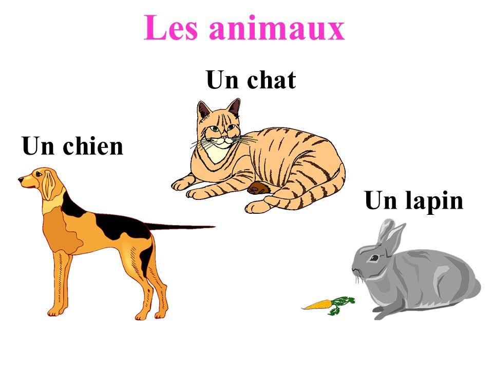 Un chien Un chat Un lapin