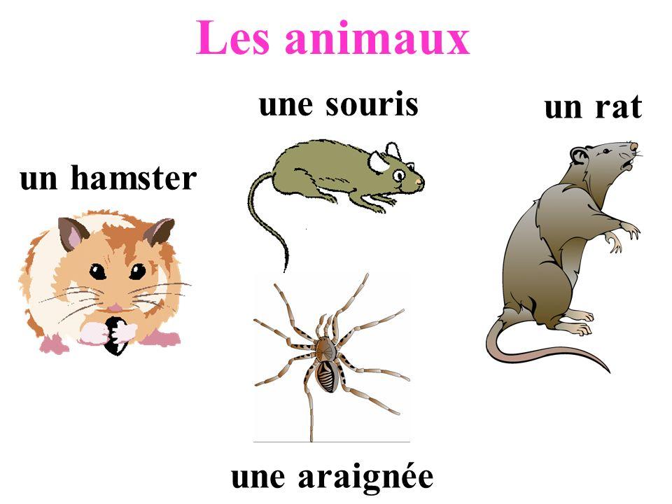 Les animaux un hamster une souris un rat une araignée