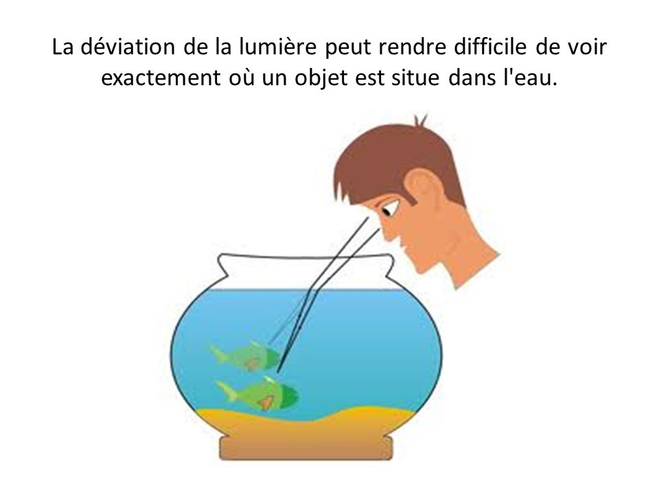 La déviation de la lumière peut rendre difficile de voir exactement où un objet est situe dans l'eau.