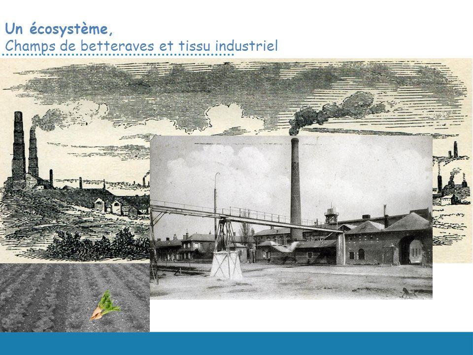 Un écosystème, Champs de betteraves et tissu industriel