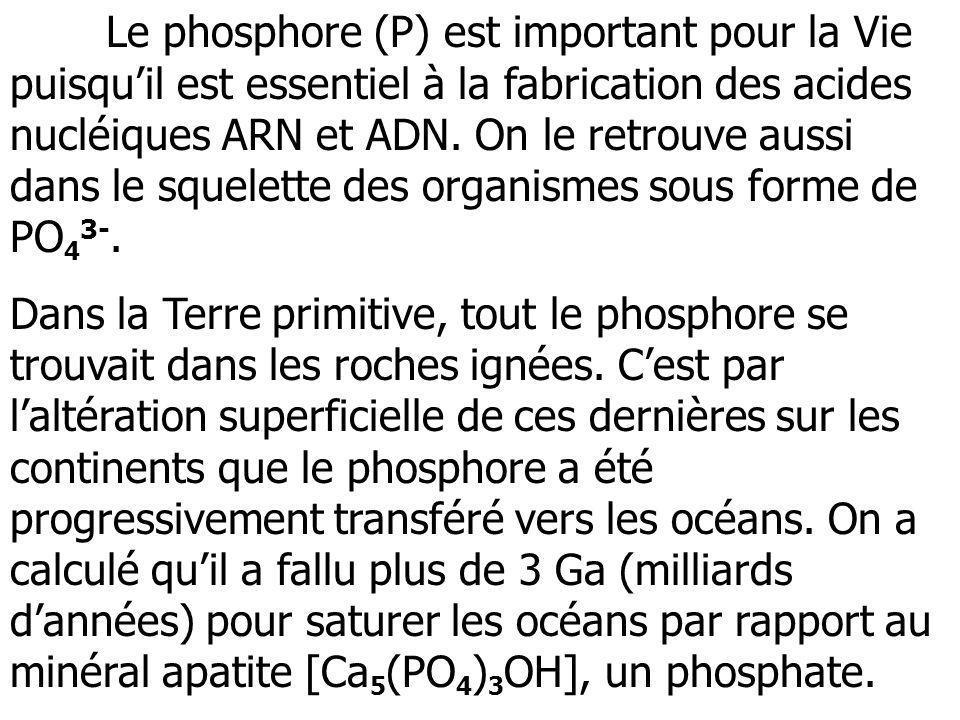 Le phosphore (P) est important pour la Vie puisquil est essentiel à la fabrication des acides nucléiques ARN et ADN. On le retrouve aussi dans le sque