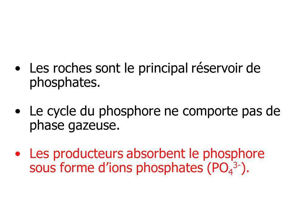 Les roches sont le principal réservoir de phosphates. Le cycle du phosphore ne comporte pas de phase gazeuse. Les producteurs absorbent le phosphore s