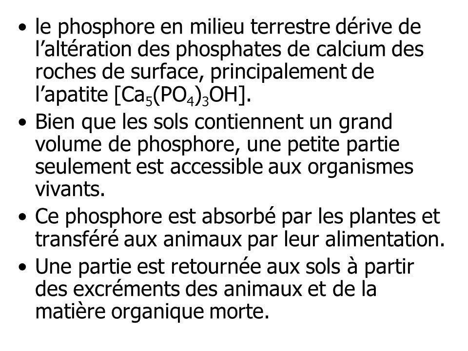 le phosphore en milieu terrestre dérive de laltération des phosphates de calcium des roches de surface, principalement de lapatite [Ca 5 (PO 4 ) 3 OH]