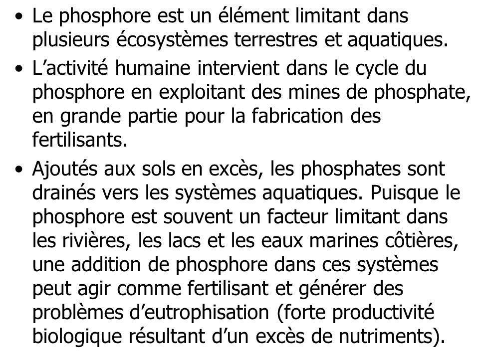Le phosphore est un élément limitant dans plusieurs écosystèmes terrestres et aquatiques. Lactivité humaine intervient dans le cycle du phosphore en e