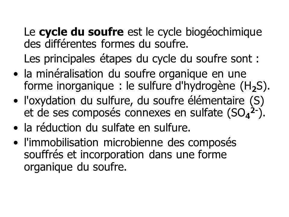 Le cycle du soufre est le cycle biogéochimique des différentes formes du soufre. Les principales étapes du cycle du soufre sont : la minéralisation du