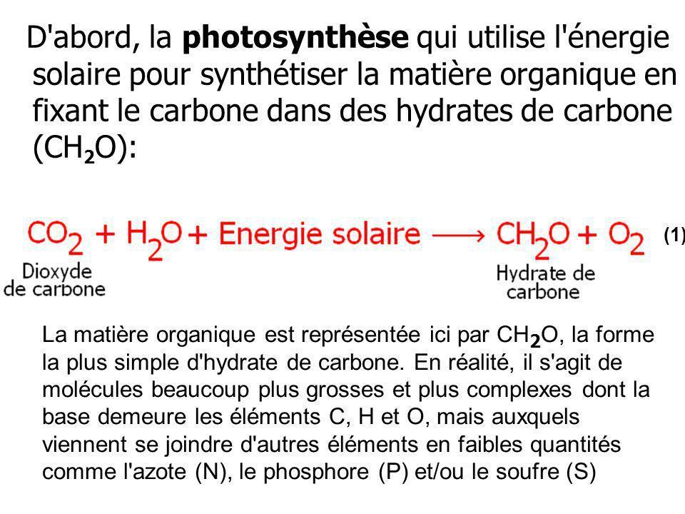 D'abord, la photosynthèse qui utilise l'énergie solaire pour synthétiser la matière organique en fixant le carbone dans des hydrates de carbone (CH 2