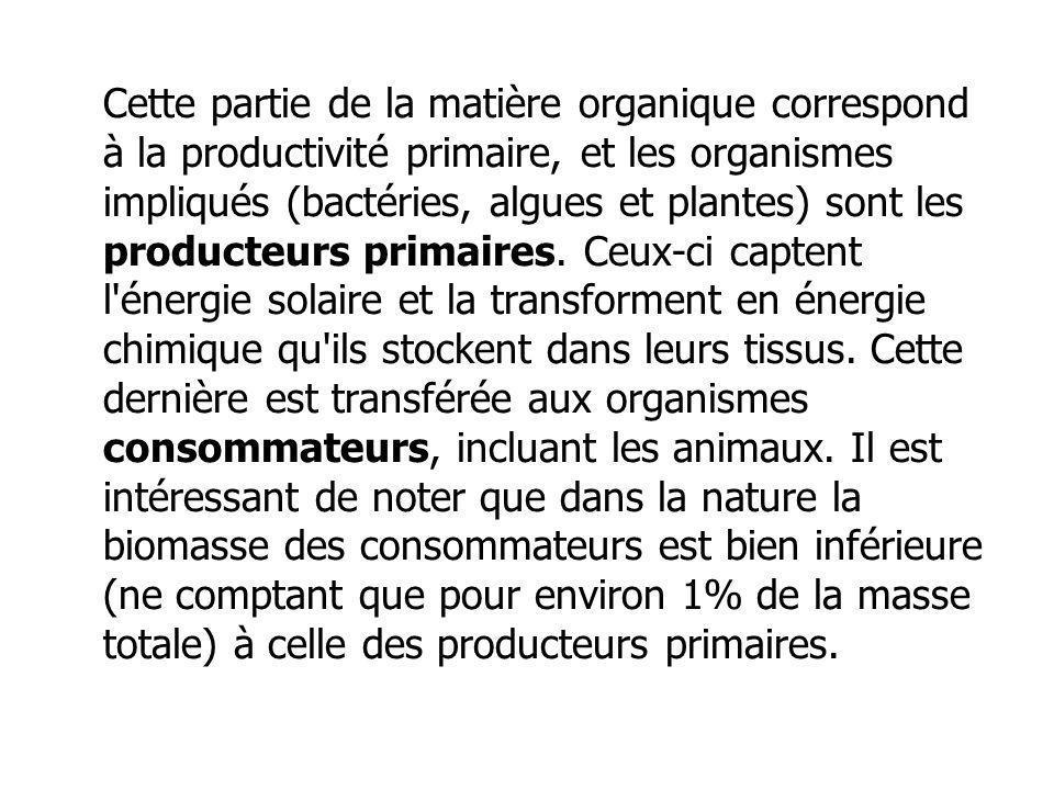 Cette partie de la matière organique correspond à la productivité primaire, et les organismes impliqués (bactéries, algues et plantes) sont les produc