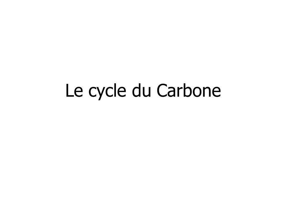 Cycle du phosphore