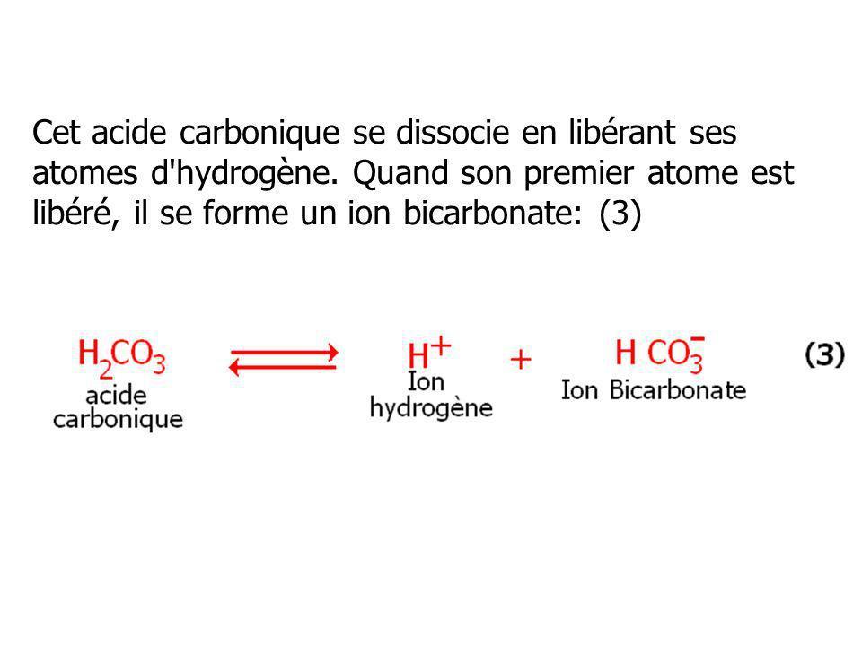 Cet acide carbonique se dissocie en libérant ses atomes d'hydrogène. Quand son premier atome est libéré, il se forme un ion bicarbonate: (3)