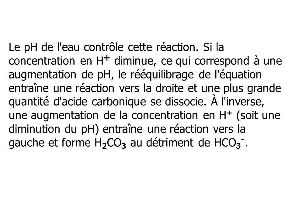 Le pH de l'eau contrôle cette réaction. Si la concentration en H + diminue, ce qui correspond à une augmentation de pH, le rééquilibrage de l'équation