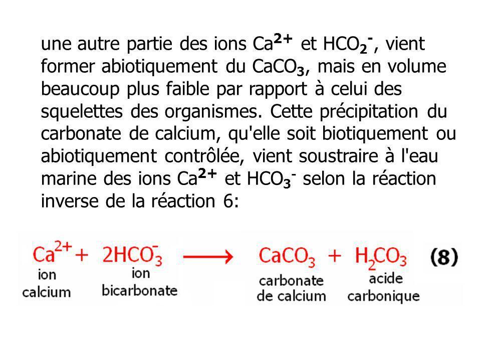 une autre partie des ions Ca 2+ et HCO 2 -, vient former abiotiquement du CaCO 3, mais en volume beaucoup plus faible par rapport à celui des squelett