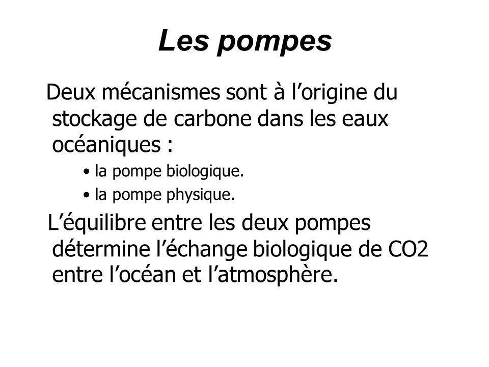 Les pompes Deux mécanismes sont à lorigine du stockage de carbone dans les eaux océaniques : la pompe biologique. la pompe physique. Léquilibre entre