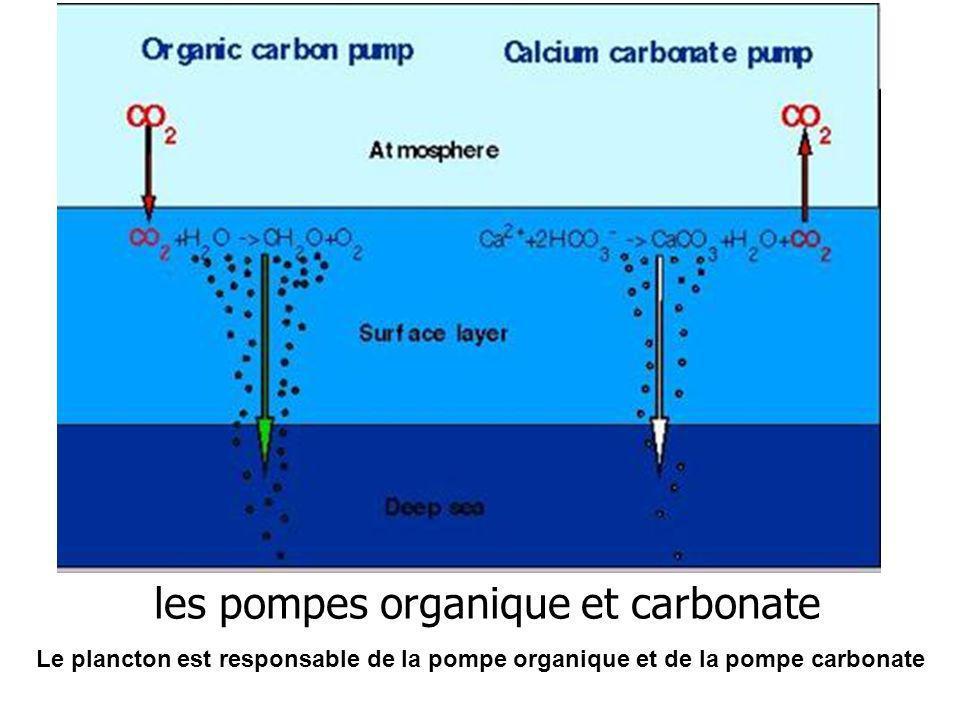 les pompes organique et carbonate Le plancton est responsable de la pompe organique et de la pompe carbonate