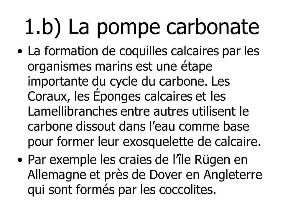 1.b) La pompe carbonate La formation de coquilles calcaires par les organismes marins est une étape importante du cycle du carbone. Les Coraux, les Ép