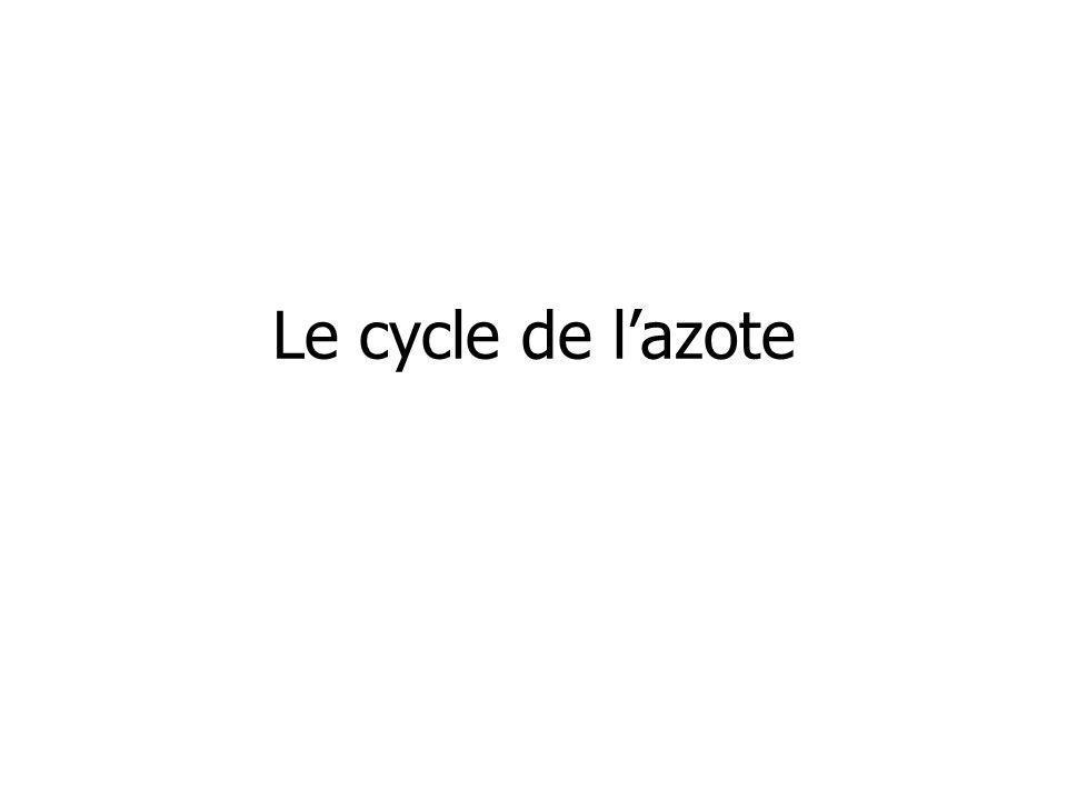 Le cycle de lazote
