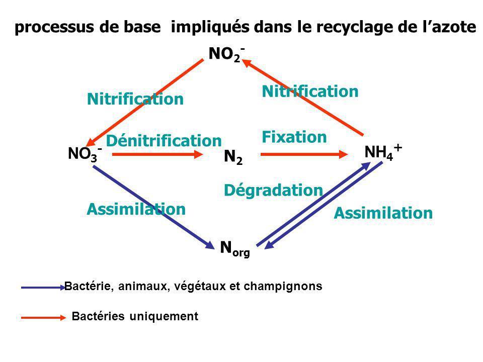 NO 2 - NH 4 + N org N2N2 NO 3 - Nitrification Dénitrification Fixation Assimilation Dégradation Bactérie, animaux, végétaux et champignons Bactéries u
