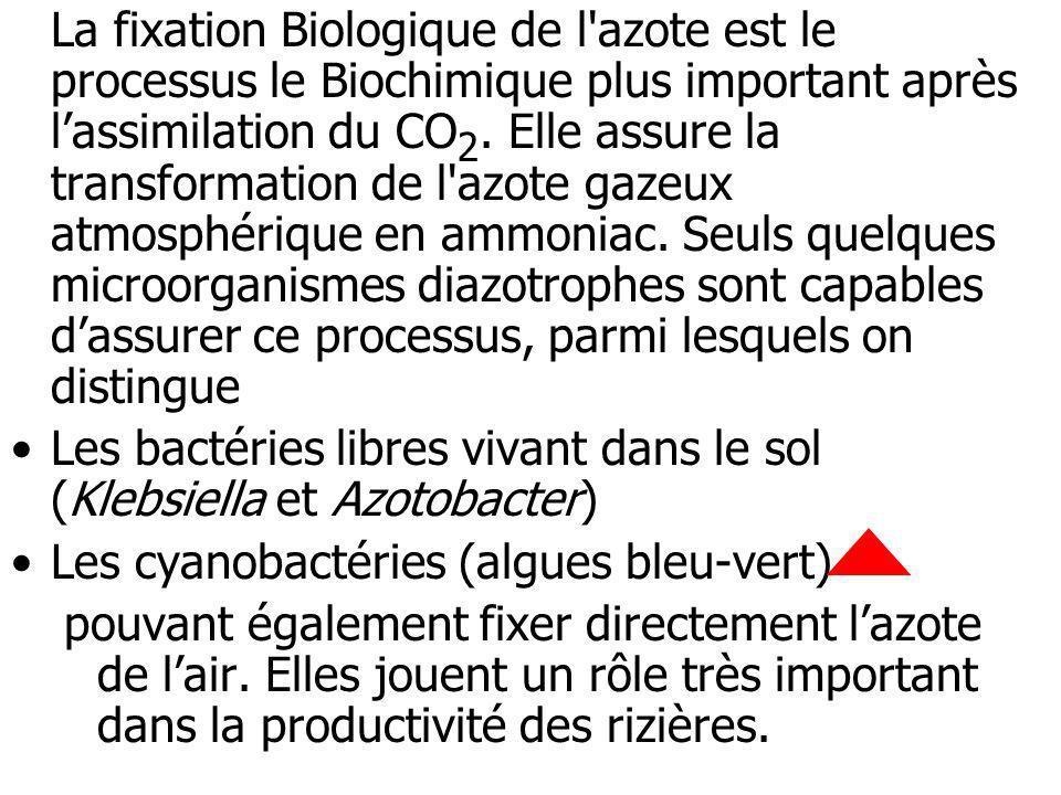 La fixation Biologique de l'azote est le processus le Biochimique plus important après lassimilation du CO 2. Elle assure la transformation de l'azote
