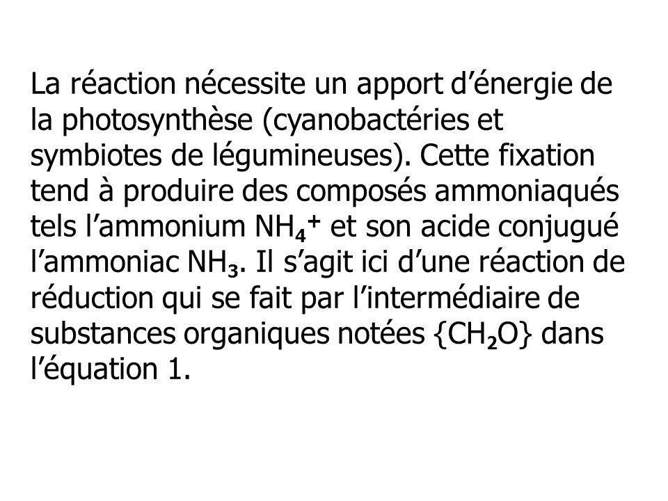 La réaction nécessite un apport dénergie de la photosynthèse (cyanobactéries et symbiotes de légumineuses). Cette fixation tend à produire des composé