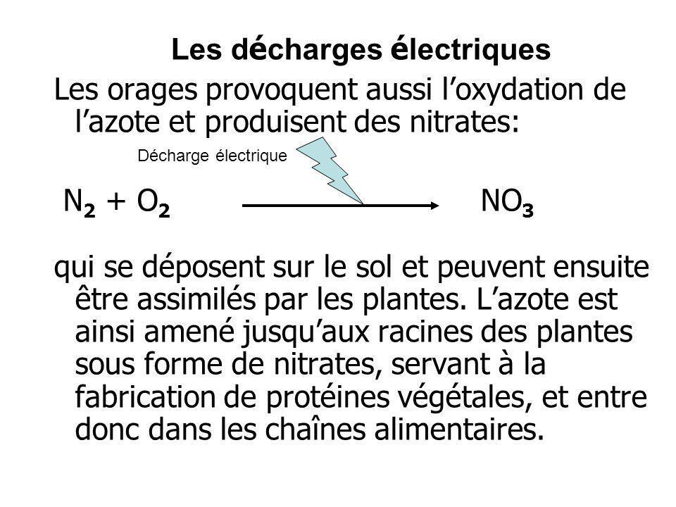 Les d é charges é lectriques Les orages provoquent aussi loxydation de lazote et produisent des nitrates: N 2 + O 2 NO 3 qui se déposent sur le sol et
