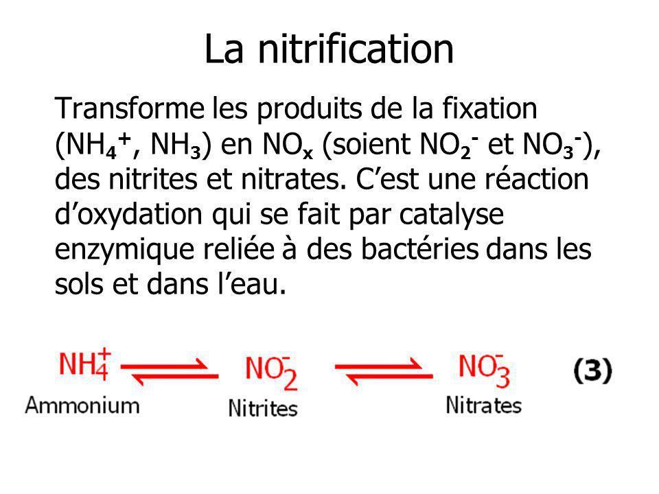 La nitrification Transforme les produits de la fixation (NH 4 +, NH 3 ) en NO x (soient NO 2 - et NO 3 - ), des nitrites et nitrates. Cest une réactio