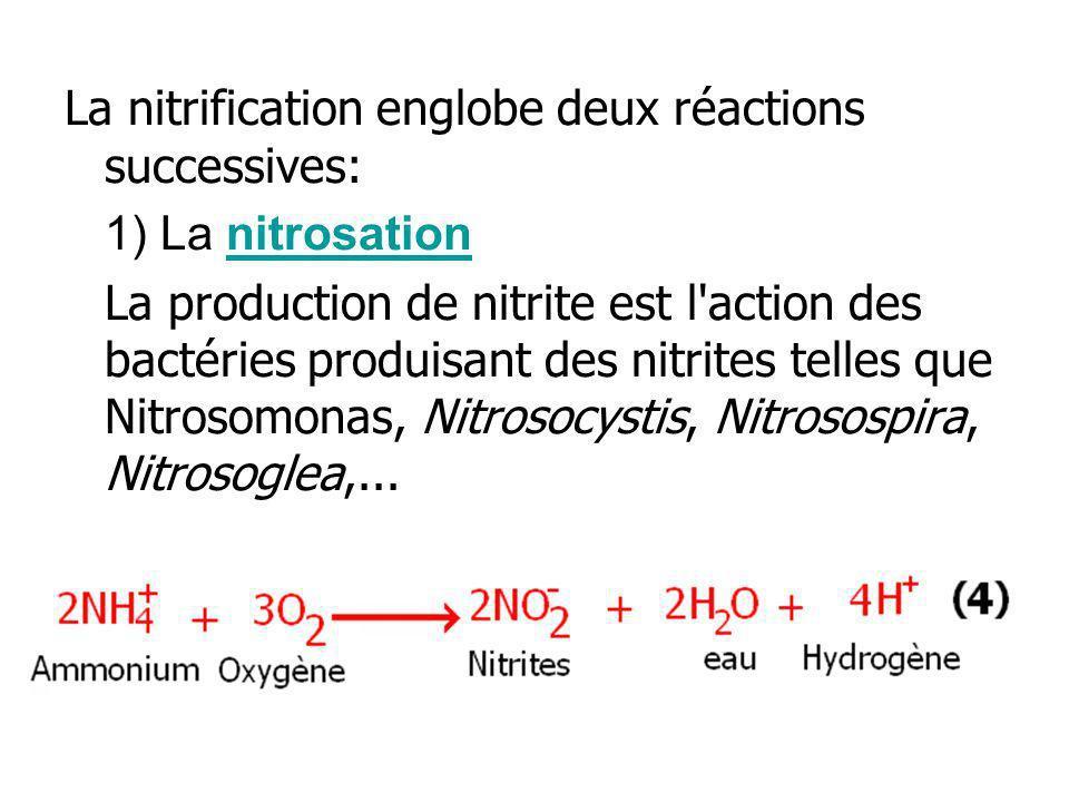 La nitrification englobe deux réactions successives: 1) La nitrosationnitrosation La production de nitrite est l'action des bactéries produisant des n