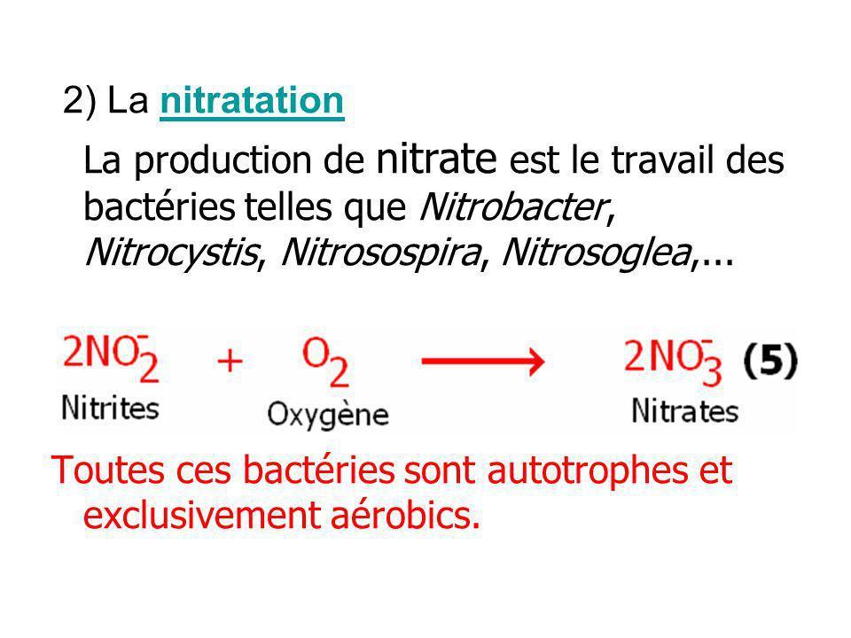 2) La nitratationnitratation La production de nitrate est le travail des bactéries telles que Nitrobacter, Nitrocystis, Nitrosospira, Nitrosoglea,...