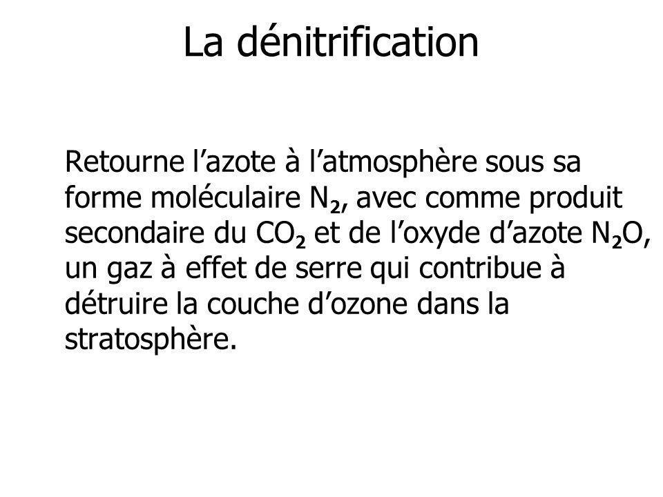 La dénitrification Retourne lazote à latmosphère sous sa forme moléculaire N 2, avec comme produit secondaire du CO 2 et de loxyde dazote N 2 O, un ga