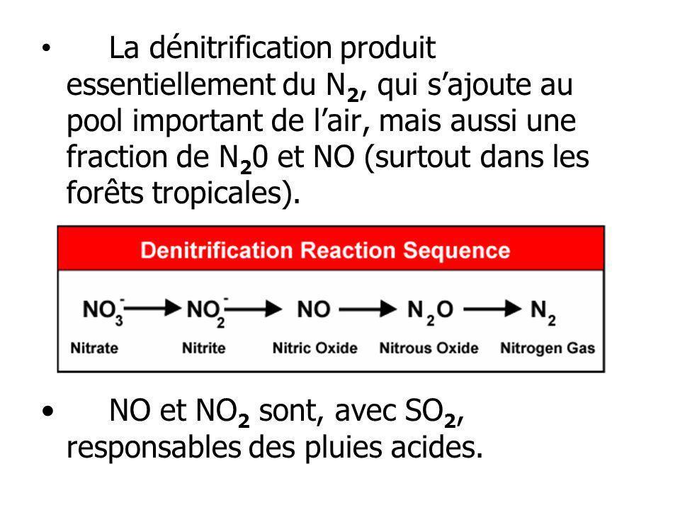 La dénitrification produit essentiellement du N 2, qui sajoute au pool important de lair, mais aussi une fraction de N 2 0 et NO (surtout dans les for
