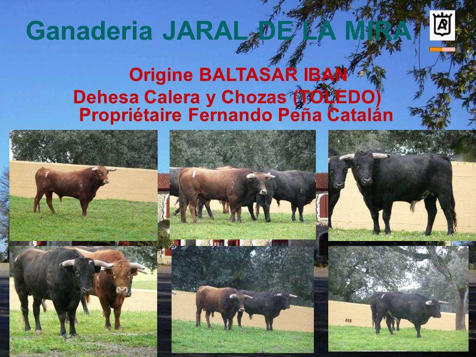 Ganaderia JARAL DE LA MIRA Origine BALTASAR IBAN Dehesa Calera y Chozas (TOLEDO) Propriétaire Fernando Peña Catalán