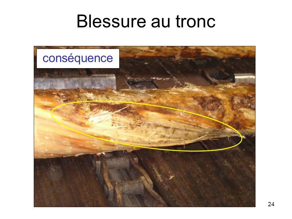 24 Blessure au tronc conséquence