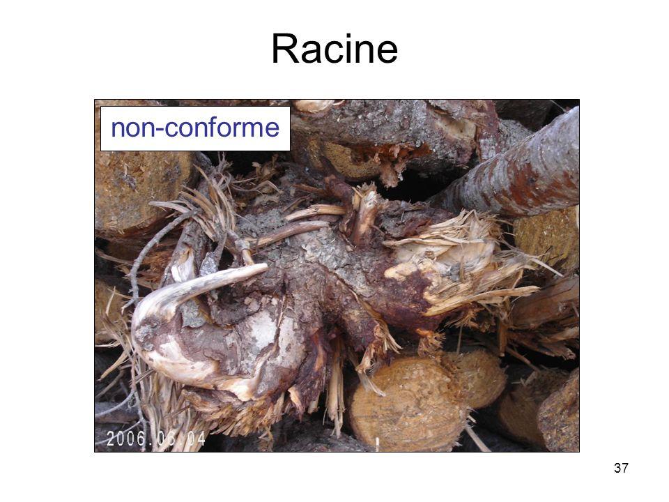 37 Racine non-conforme