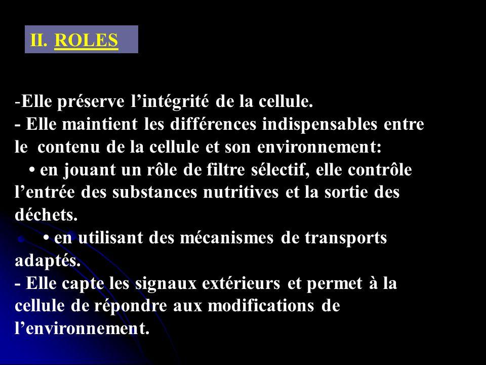 II. ROLES -Elle préserve lintégrité de la cellule. - Elle maintient les différences indispensables entre le contenu de la cellule et son environnement