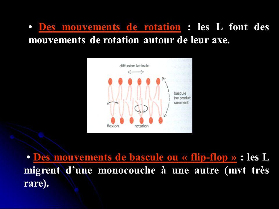 Des mouvements de rotation : les L font des mouvements de rotation autour de leur axe. Des mouvements de bascule ou « flip-flop » : les L migrent dune
