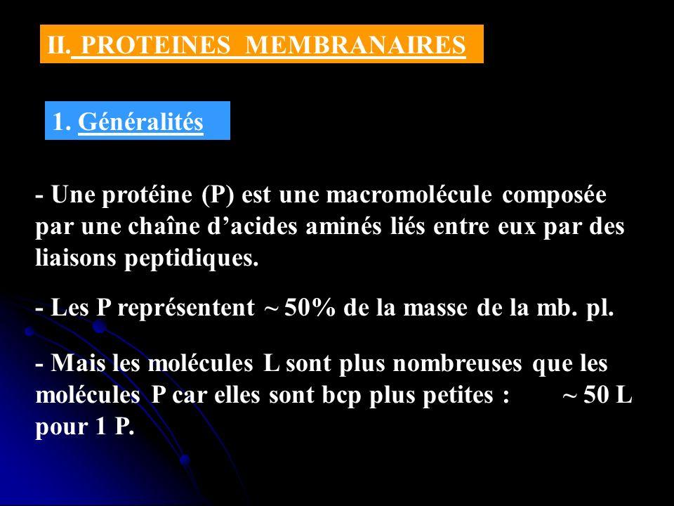 II. PROTEINES MEMBRANAIRES 1. Généralités - Une protéine (P) est une macromolécule composée par une chaîne dacides aminés liés entre eux par des liais