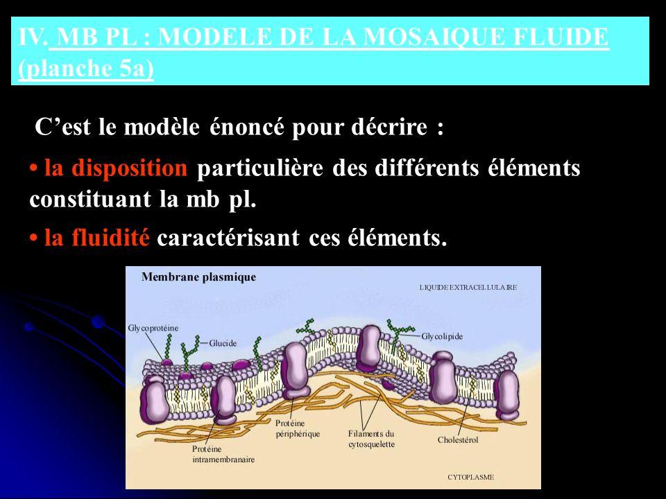 IV. MB PL : MODELE DE LA MOSAIQUE FLUIDE (planche 5a) Cest le modèle énoncé pour décrire : la disposition particulière des différents éléments constit