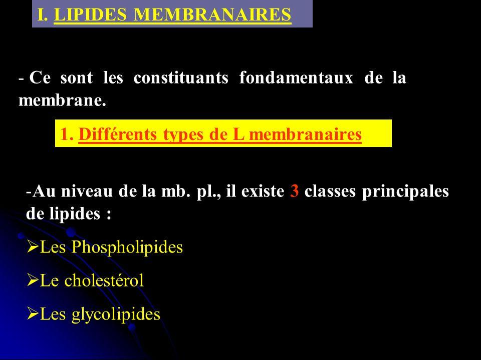 I. LIPIDES MEMBRANAIRES 1. Différents types de L membranaires -Au niveau de la mb. pl., il existe 3 classes principales de lipides : Les Phospholipide