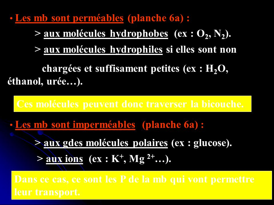 Les mb sont perméables (planche 6a) : > aux molécules hydrophobes (ex : O 2, N 2 ). > aux molécules hydrophiles si elles sont non chargées et suffisam