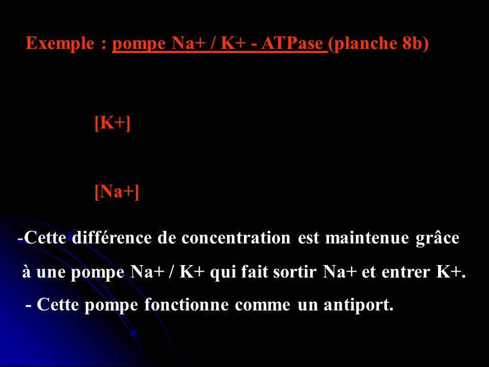 Exemple : pompe Na+ / K+ - ATPase (planche 8b) - Dans le fonctionnement normal dune cellule, [K+] est bcp plus élevée à lintérieur des cellules p/r à