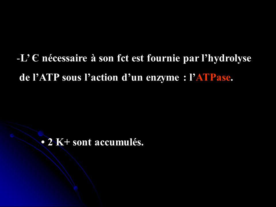 -L Є nécessaire à son fct est fournie par lhydrolyse de lATP sous laction dun enzyme : lATPase. - Pour chaque molécule dATP hydrolysée : 3 Na+ sont ex