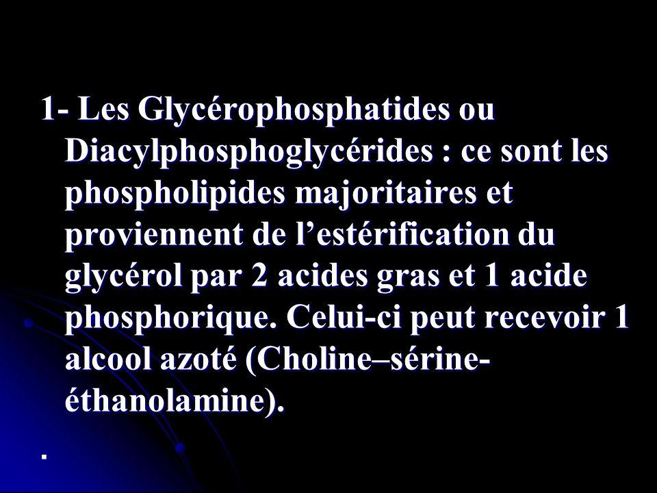 1- Les Glycérophosphatides ou Diacylphosphoglycérides : ce sont les phospholipides majoritaires et proviennent de lestérification du glycérol par 2 ac