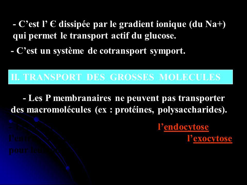 - Cest l Є dissipée par le gradient ionique (du Na+) qui permet le transport actif du glucose. - Cest un système de cotransport symport. II. TRANSPORT