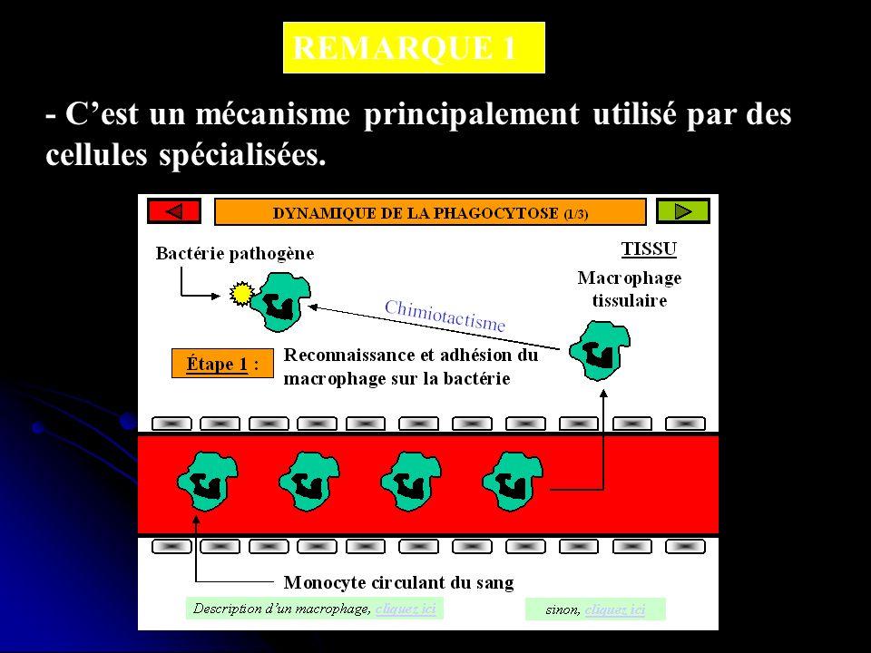 REMARQUE 1 - Cest un mécanisme principalement utilisé par des cellules spécialisées.