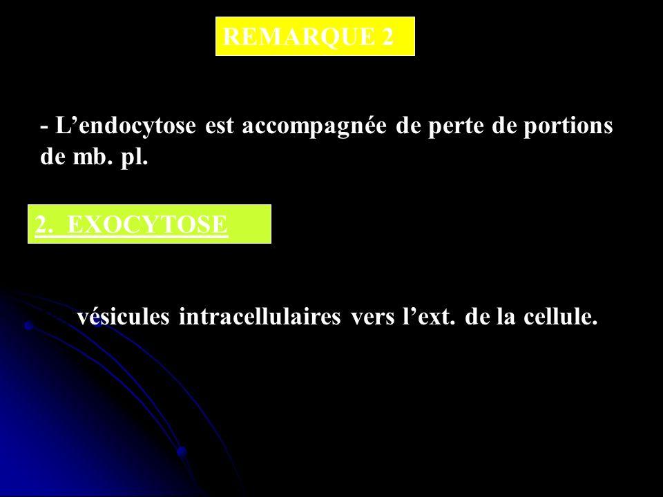 REMARQUE 2 - Lendocytose est accompagnée de perte de portions de mb. pl. 2. EXOCYTOSE - Cest le rejet de macromolécules contenues dans des vésicules i