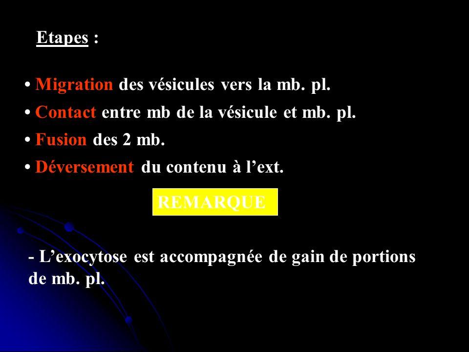 Etapes : Migration des vésicules vers la mb. pl. Contact entre mb de la vésicule et mb. pl. Fusion des 2 mb. Déversement du contenu à lext. REMARQUE -