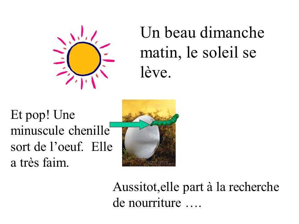 un petit oeuf repose sur une feuille Dans la lumière de la lune ….