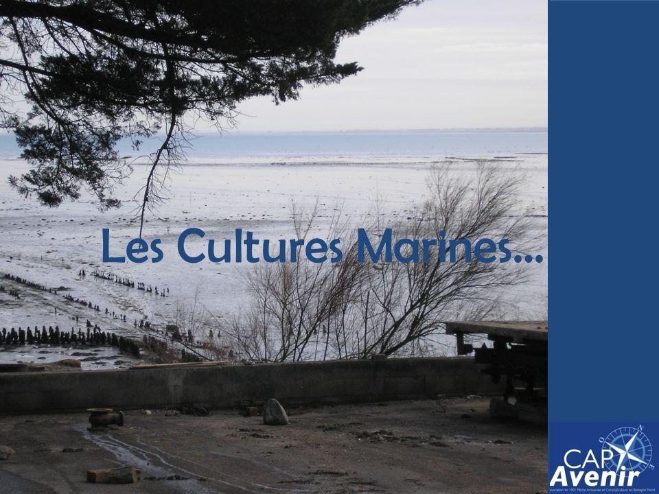 Les Cultures Marines…