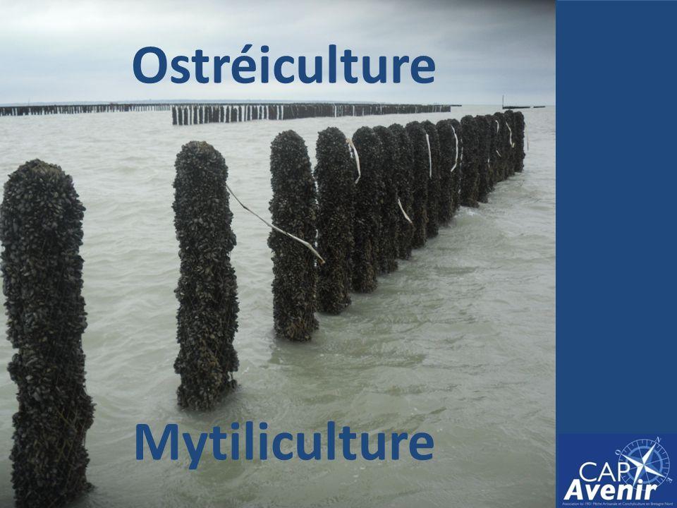 Ostréiculture Mytiliculture
